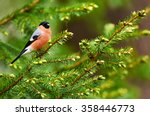 bullfinch male perched on a... | Shutterstock . vector #358446773