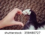 Stock photo person s hand and a cat s paw making a heart shape instagram toned effect 358480727