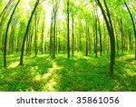 forest | Shutterstock . vector #35861056