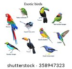 exotic bird set vector... | Shutterstock .eps vector #358947323