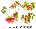 set ripe apples on a branch... | Shutterstock . vector #359131043