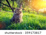 Siberian Cat Sitting In The...