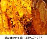 Baltic Amber  Resin Segments...