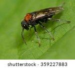 alder sawfly  eriocampa ovata ...   Shutterstock . vector #359227883