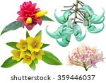 Stock photo collection of tropical flowers isolated on white background 359446037