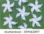 fresh white jasmine on green... | Shutterstock . vector #359462897