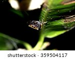 jumper spider on leaf | Shutterstock . vector #359504117