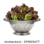 Fresh Red Leaf Lettuce In A...