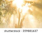 Morning Sun Light Rays