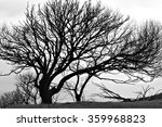 A Silhouette Of A Tree On An...