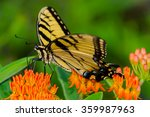 a tiger swallowtail on... | Shutterstock . vector #359987963