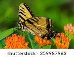 a tiger swallowtail on... | Shutterstock . vector #359987963