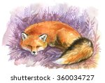 sleepy cute red fox in a... | Shutterstock . vector #360034727