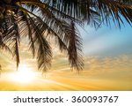 coconut palm tree summer nature ... | Shutterstock . vector #360093767
