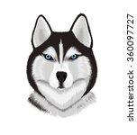 dog breed  siberian husky | Shutterstock . vector #360097727