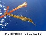 Environmental Issue  Seahorse...