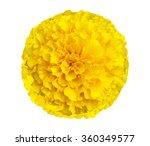 Marigolds Flower  Tagetes...