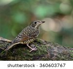 beautiful grey bird  the... | Shutterstock . vector #360603767