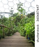 Small photo of Inside the Tropical Green House at Eden Project, UK