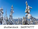snow on pine trees in the... | Shutterstock . vector #360974777