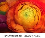 Red Flower Orange Flower Yello...