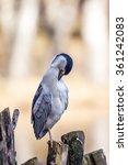 crane bird | Shutterstock . vector #361242083