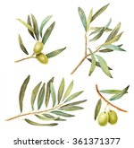 set of olive branches with... | Shutterstock . vector #361371377