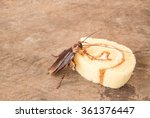 cockroach eating a bread on... | Shutterstock . vector #361376447