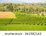 tea plantation in thai  thailand | Shutterstock . vector #361582163