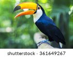 exotic toucan bird in natural... | Shutterstock . vector #361649267