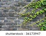 Green Vines On Brick Wall