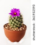 Cactus Purple Flower On White...