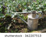 Galvanized Watering Can On An...