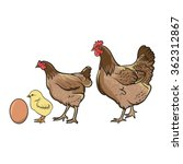 the chicken evolution | Shutterstock .eps vector #362312867