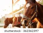 Stock photo horse riding 362362397