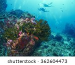 anemone or actinia home or... | Shutterstock . vector #362604473