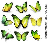 Nine Green Yellow Butterflies...