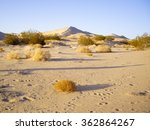 Mojave Desert Dunes And Flora