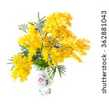Small photo of Acacia dealbata or acacia whited (Mimosa) in vase isolated on white background