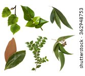 variety of leaves  isolated on... | Shutterstock . vector #362948753
