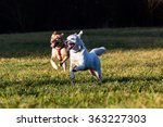 brown mixed shelter dogs outside | Shutterstock . vector #363227303