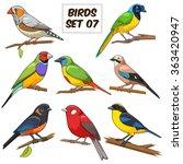 Bird Set Cartoon Colorful...