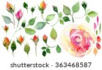 Stock photo watercolor hand drawn roses set of flowers traditional drawing and painting by watercolor on white 363468587
