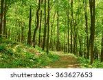 russian green forest in summer. ... | Shutterstock . vector #363627653