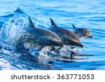 A spotted dolphin family...