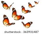 Butterflies Migrating Flight....