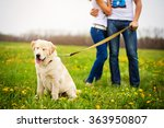 Stock photo hugs man and woman walking with dog retriever on spring 363950807