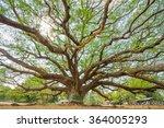 Big Rain Tree With Branch...