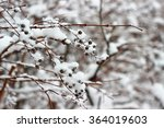 winter plant  bush under snow... | Shutterstock . vector #364019603