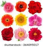 Single Flower Heads. Rose ...